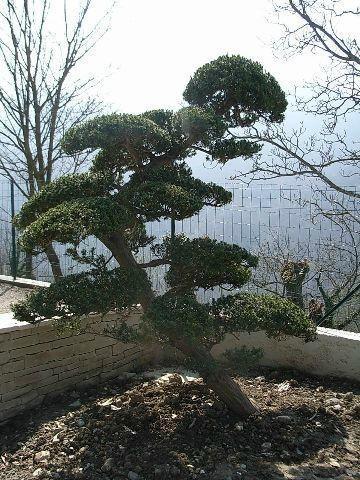 Plantation de végétaux remarquables