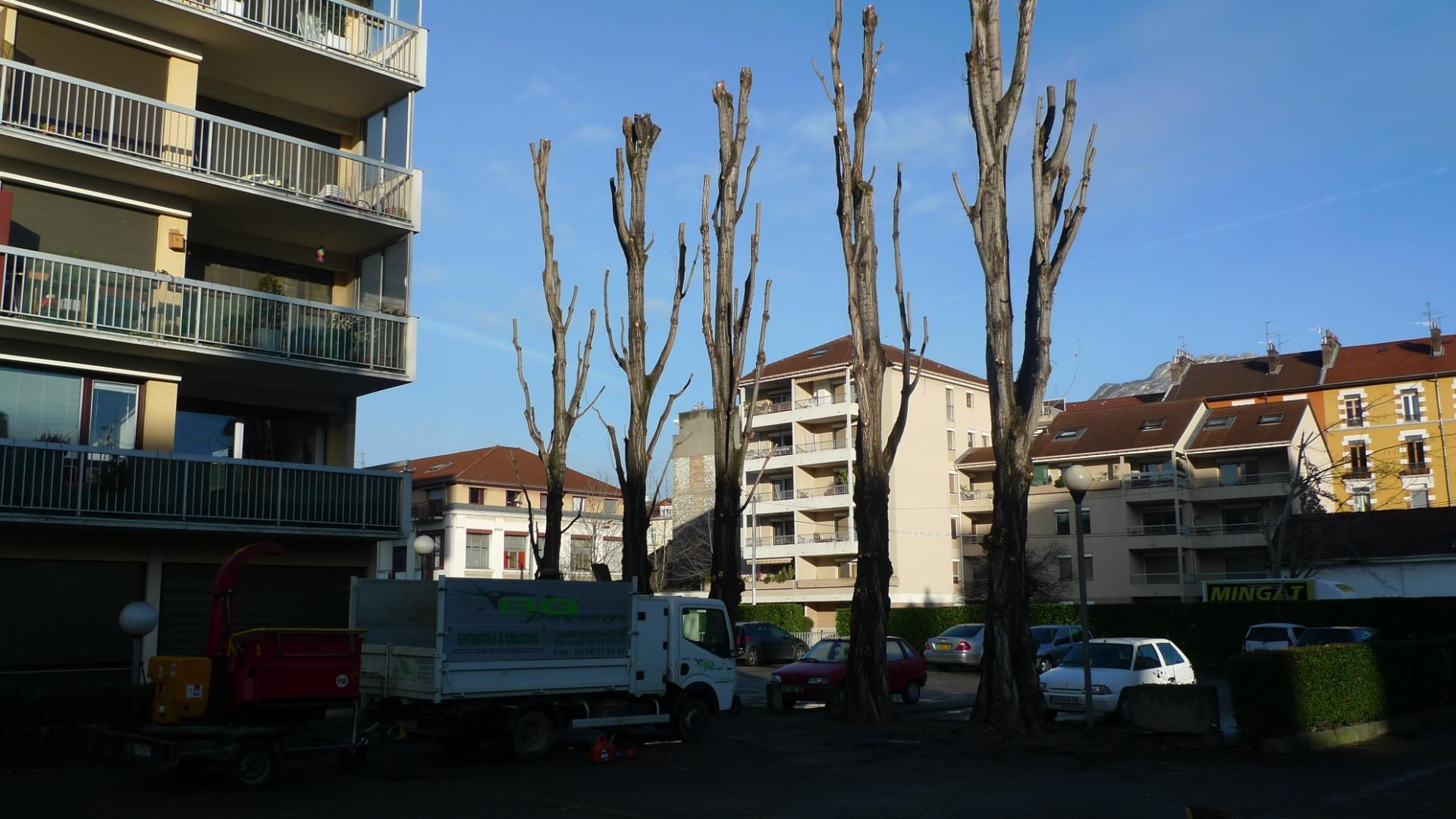 Élagage Grenoble, Gières, Saint-Martin-d'Hères...